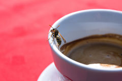 cup-coffee-wasp-4434275